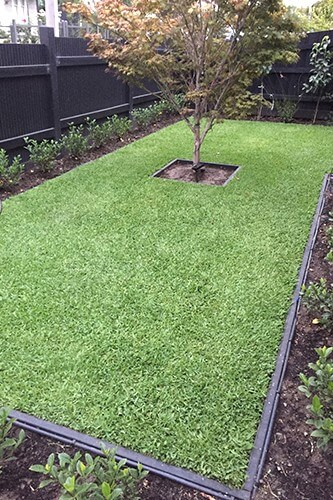 lawn solutions Northern Suburbs